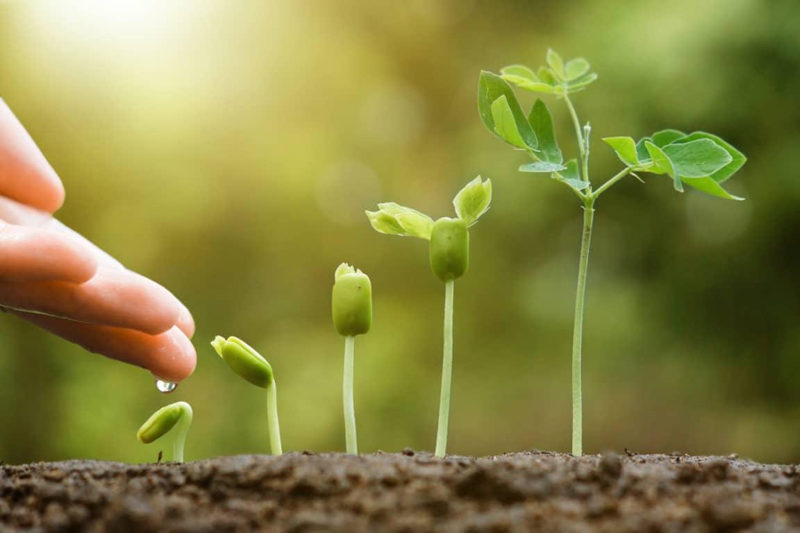 Engrais verts : à quoi ça sert et quelles espèces semer en été ?