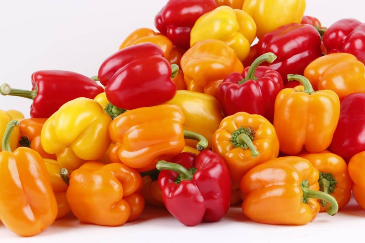 Poivron : comment le planter, le cultiver et le récolter