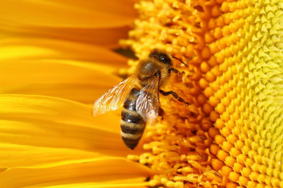 Apiculture : que faire à la ruche selon les saisons