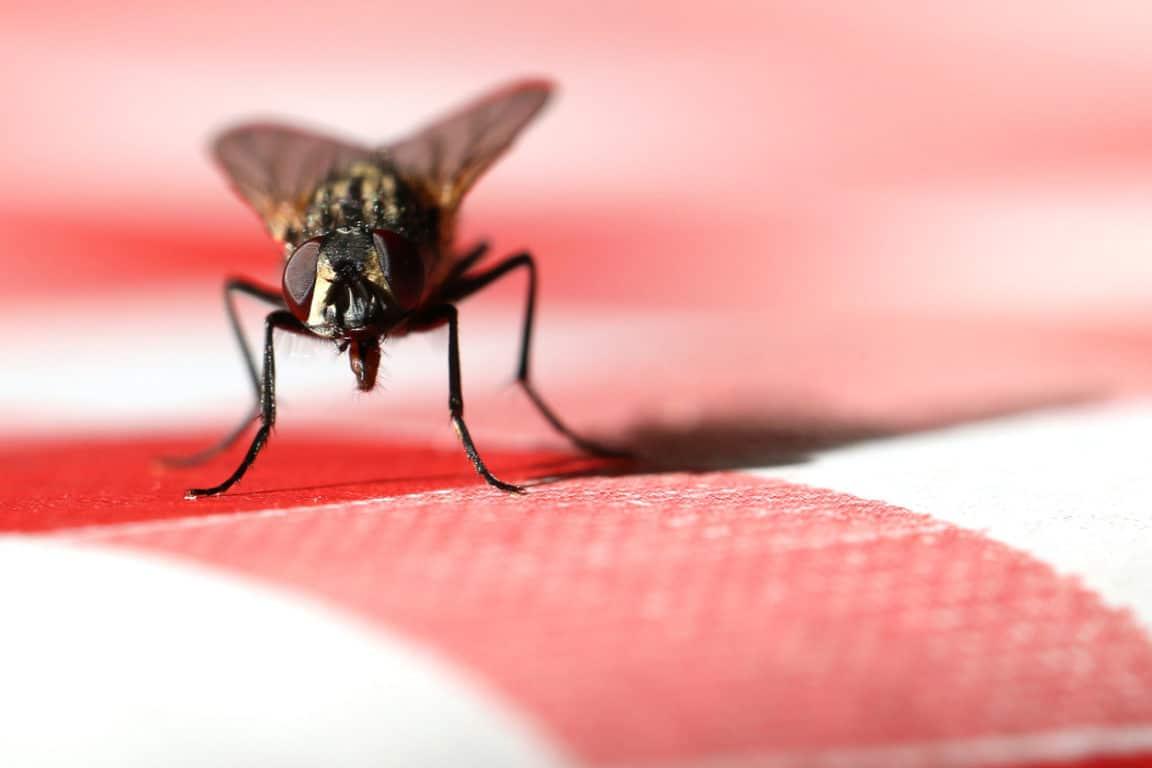 Astuce 100% naturelle contre les mouches à la maison