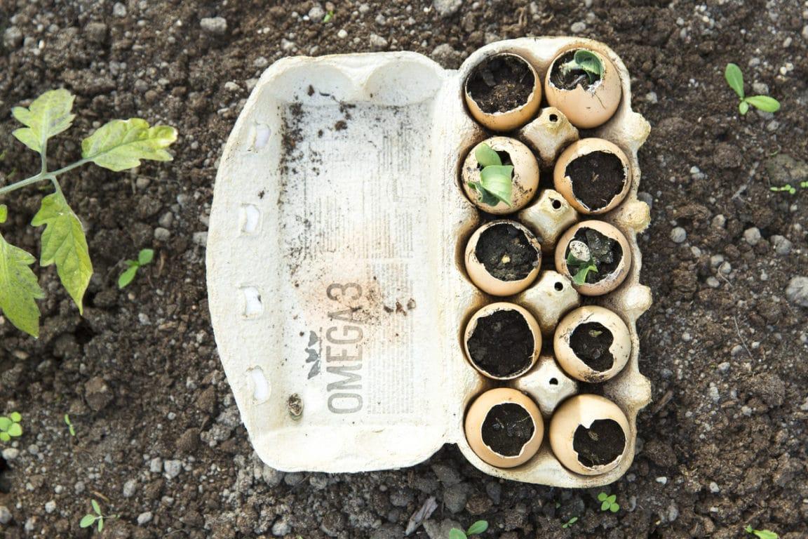 Coquilles d'oeufs : 7 utilisations incroyables pour le jardin !