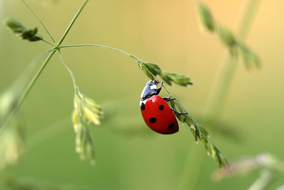 12 insectes utiles pour votre jardin