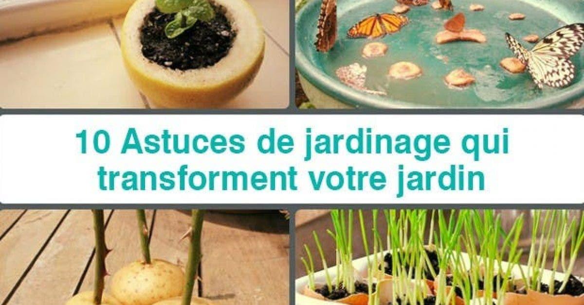 10 Astuces de jardinage qui transforment votre jardin