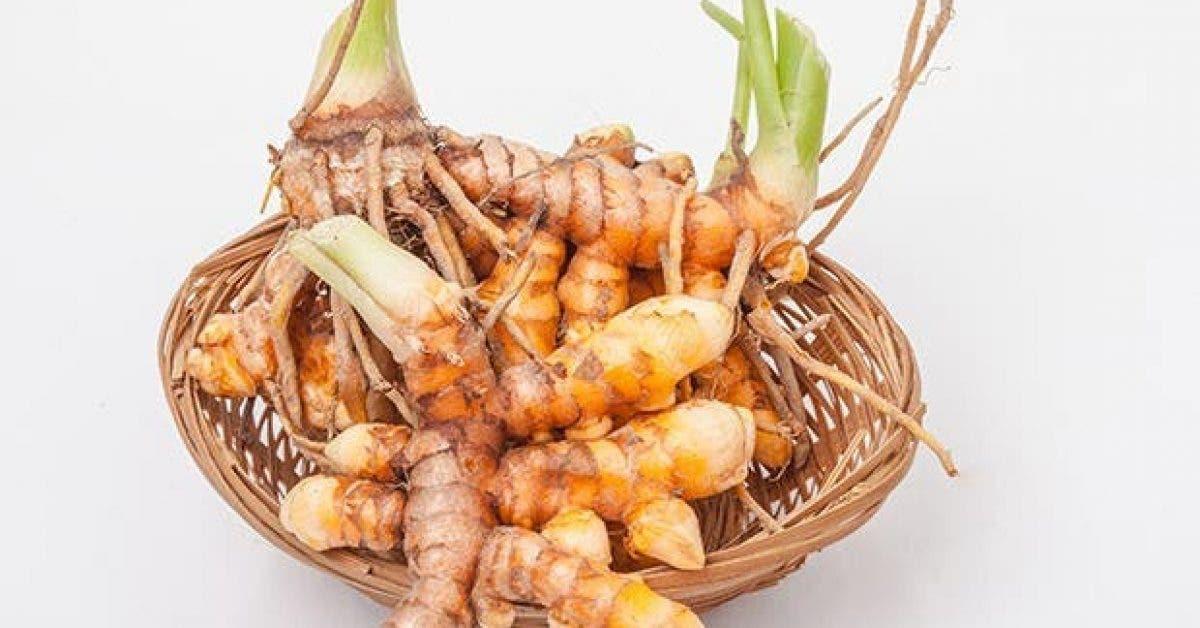 Voici comment cultiver du curcuma chez soi