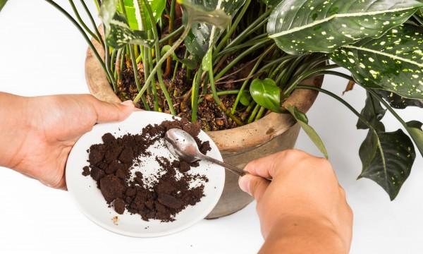 10 secrets pour un jardinage à petit budget
